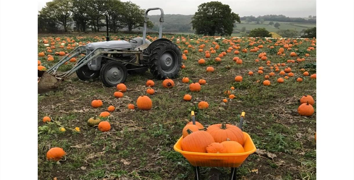 c2e9201b07c3f7 SOLD OUT - Halloween Pumpkin Patch - SOLD OUT - Visit Peak District