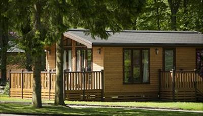 Our lodges are nestled in a woodland setting