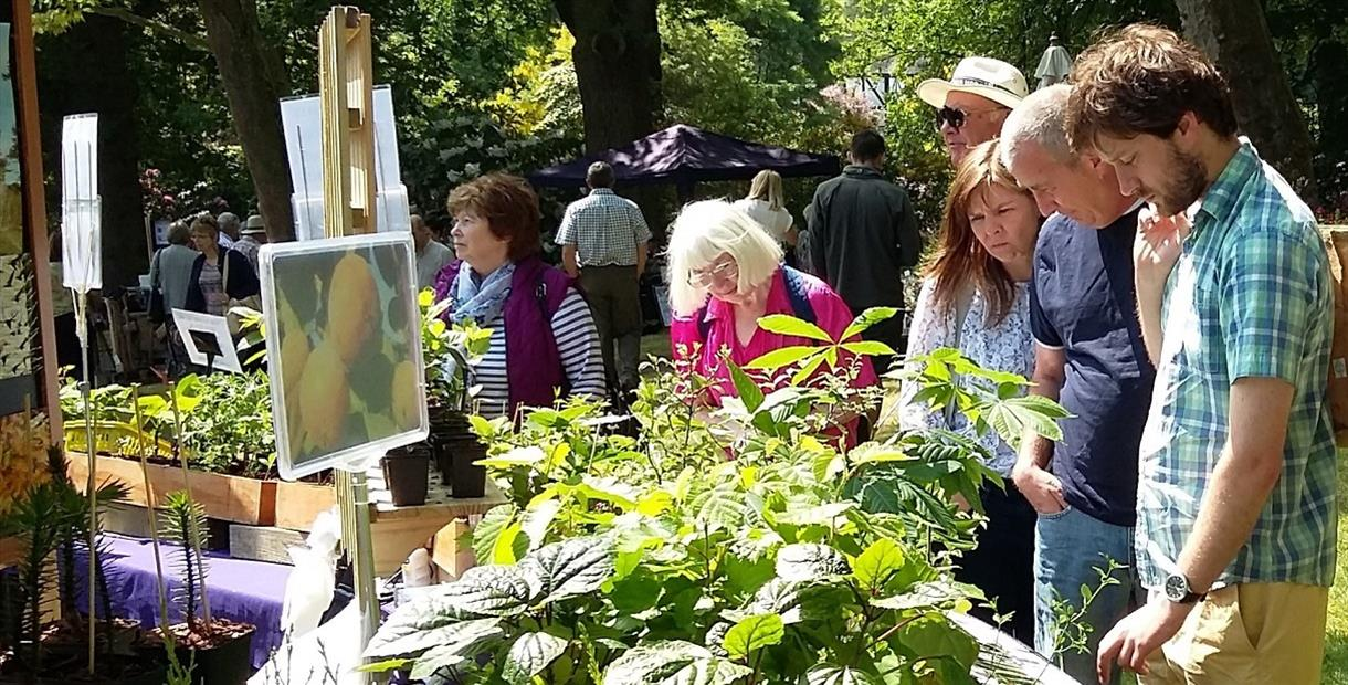 The plant fair features highly respected specialist nurseries