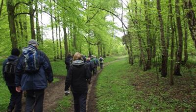 Anston Stones Wood Nature and Archaeology Walk