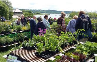Plant Hunters' Fair at Carsington Water