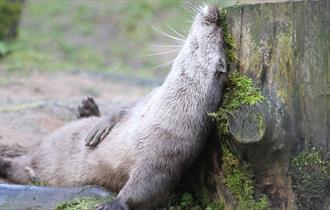 Chestnut-Centre-Lazy-Otter1220-x-620
