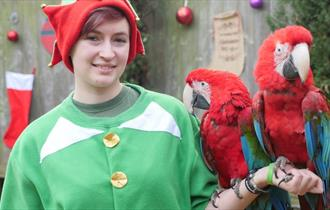 Santa, Elves & Sleigh Bells at the Tropical Butterfly House