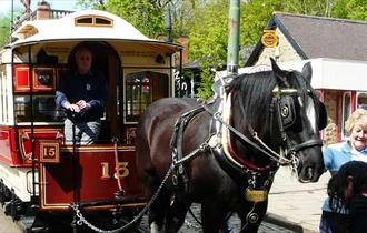 Horse Tram Day