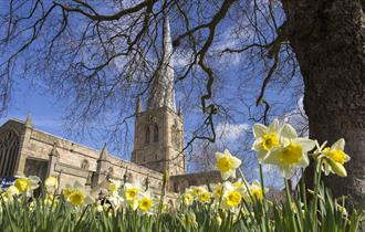 Crooked Spire and Daffodils
