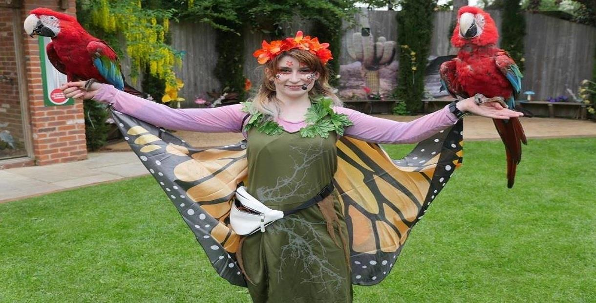 The Enchanted Fairy Forest at Tropical Butterfly House